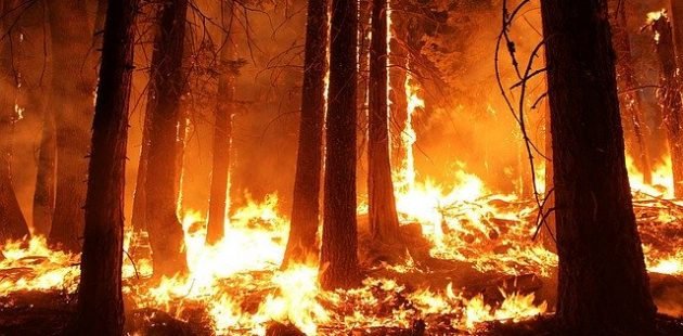 Photo: Rim Fire, Calif. 2013, Mike McMillan-USFS